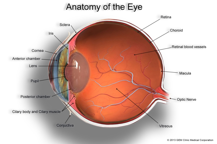 About Basic Eye Anatomy | GEM Clinic* - Glaucoma & Eye Management ...